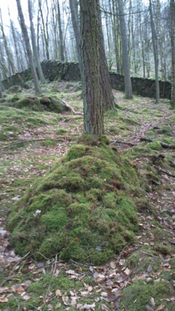 Bush craft shelter building and fire lighting Coniston Cumbria